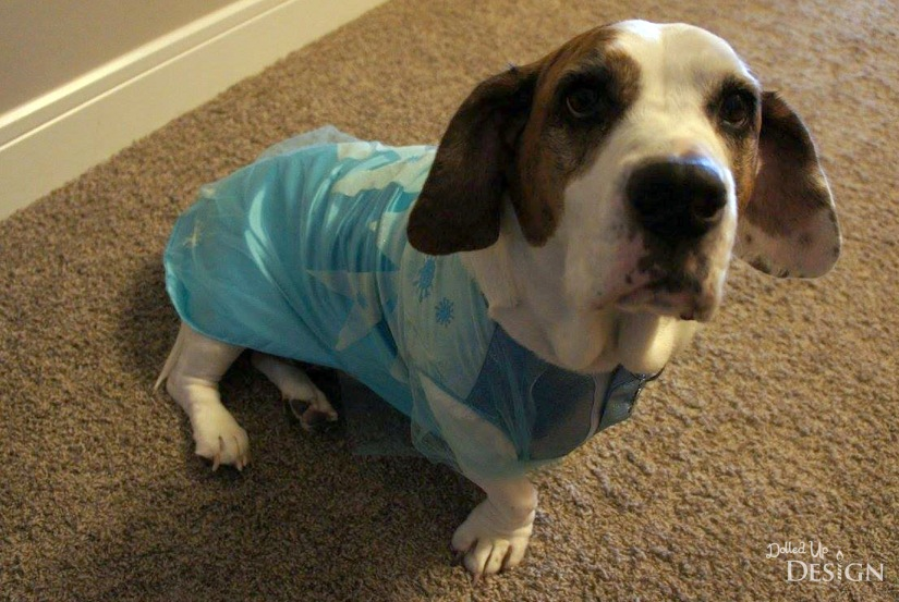 Petsmart Elsa Costume For Dogs