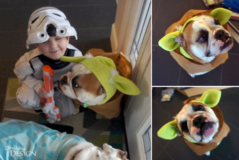 Star Wars Dog Yoda Costume